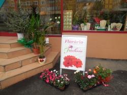 Floraria Fuchsia Resita:Floraria Fuchsia, Aranjamente florale pentru evenimente, nunti, botezuri, livrari la domiciliu, flori taiate, ghivece, Resita