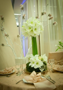 Days to Remember Timisoara:Days to Remember, Organizari evenimente, nunti, botezuri, decoratiuni sala, aranjamente florale